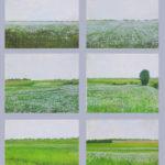 © Benoît Moreau - Pays de Caux (série N° 7 - Lin) - Huile sur toile - 6 x 22 x 27 cm - 2006 (collection particulière/France)
