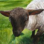 © Benoît Moreau - II - mouton - Huile sur toile - 42x42 cm - 2016