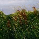 © Benoît Moreau - Dans l'herbe V - huile sur toile - -29x35cm - collection particulière France